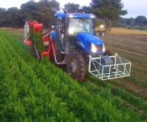 Mayoristas de hortalizas en Segovia: Zanahorias Doña Pepa