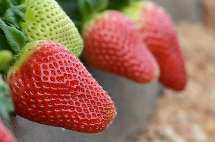 Frutas en Lepe | Jucamp Siglo XXI