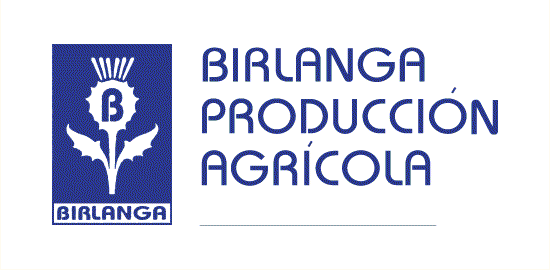 Mayorista Flor cortada BirlangaP.A. - Birlanga producción agrícola