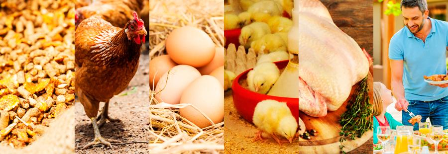Grupo SADA distribuidores mayoristas de pollo