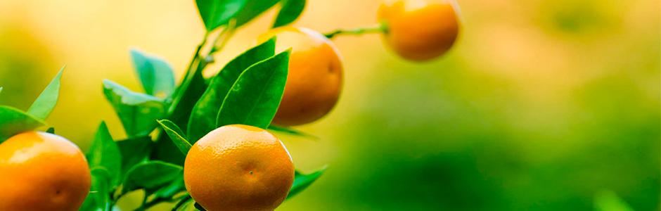 Mayorista de Frutas y Verduras | FRUTAS BERENGUER